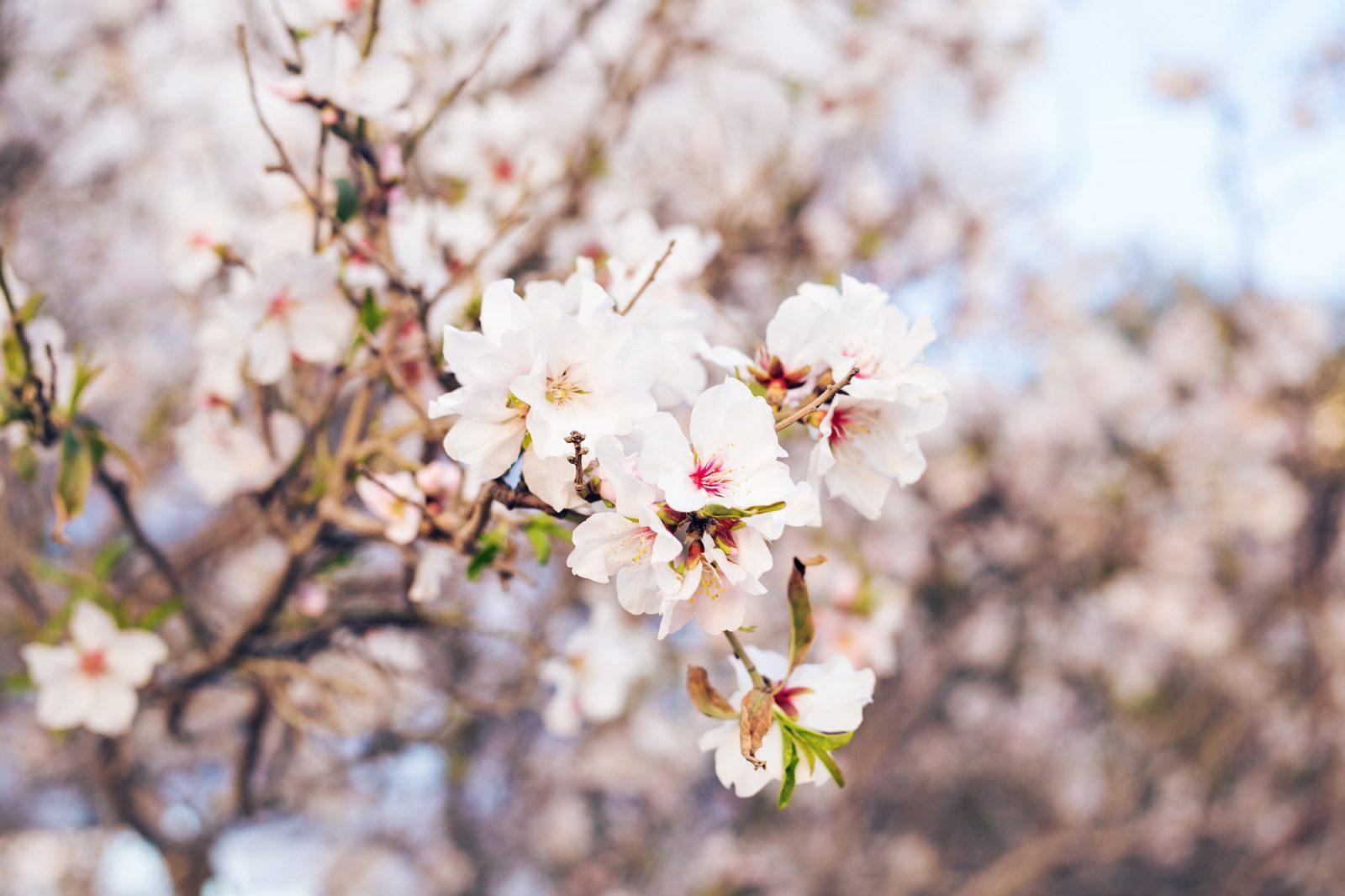 Пролетна суматоха