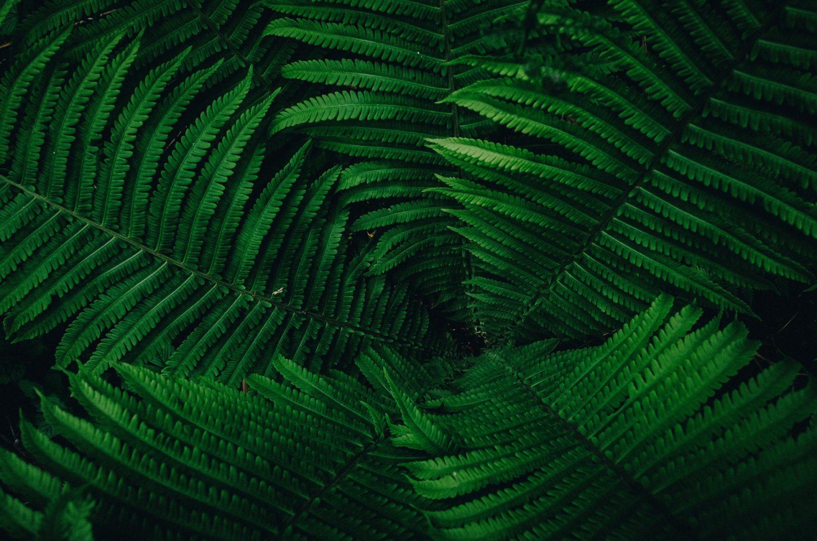Зелената аптека на природата